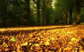 Обои время года, осень опавшие листья, природа
