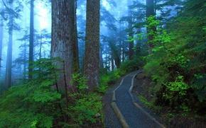 Картинка деревья, туман, листва, Парк, тропинка