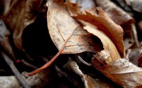 Картинка nature, leaves, leaf