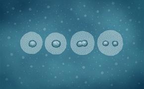 Обои клетки, деление