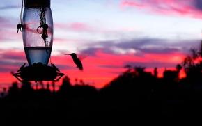 Картинка закат, птица, силуэт, алый