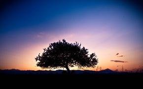Картинка sunshine, landscape, tree