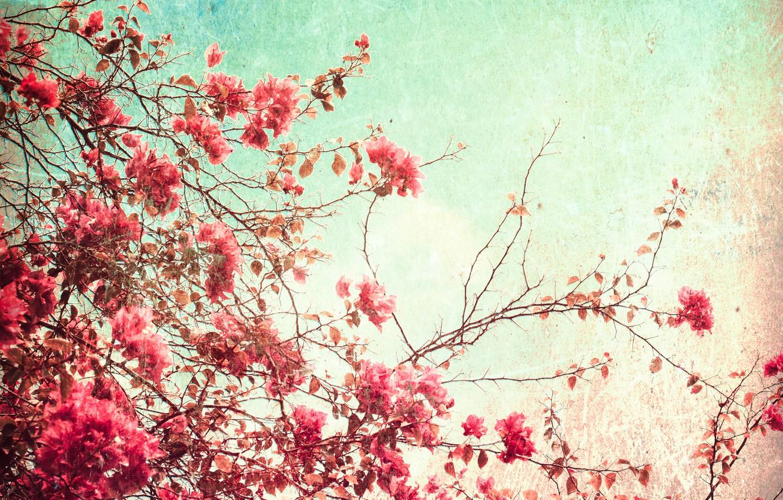 Фото обои лето, небо, цветы, бумага, зерно, свечение, текстура, день, пятна, wallpaper, картон, орнамент, материал, цветение, vintage, …