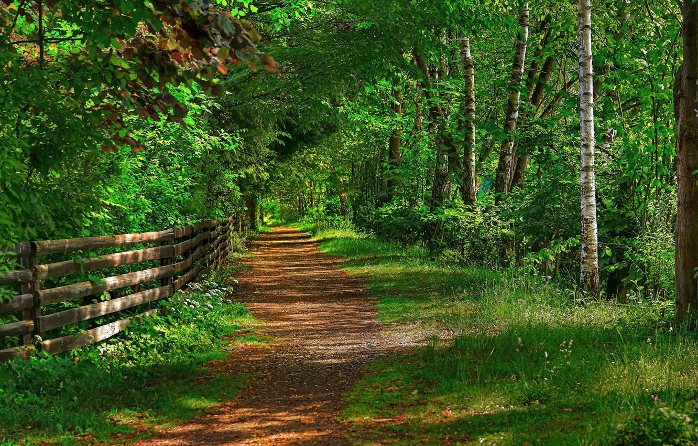 картинки лес и забор скидывать этот альбом