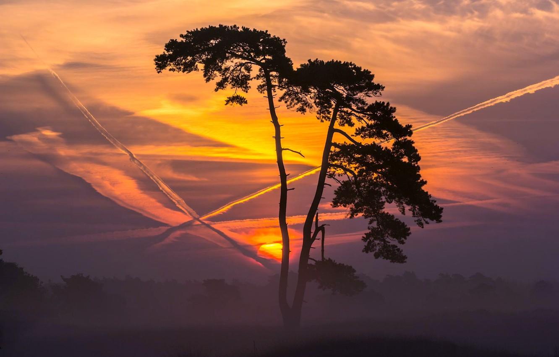 Фото обои деревья, пейзаж, закат, природа