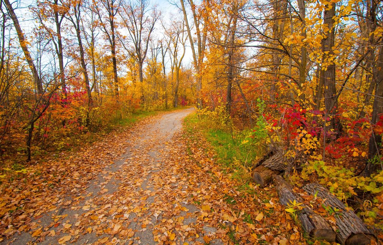 Фото обои грусть, осень, листья, деревья, парк, настроение, сад, дорожка, багрянец