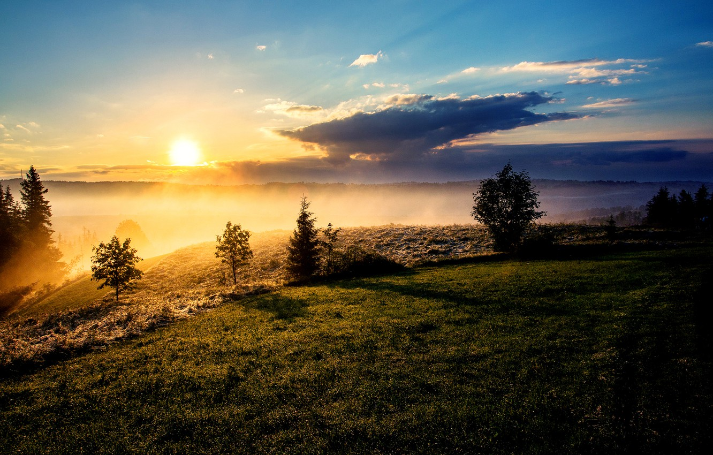 Фото обои солнце, облака, деревья, туман, утро, склон