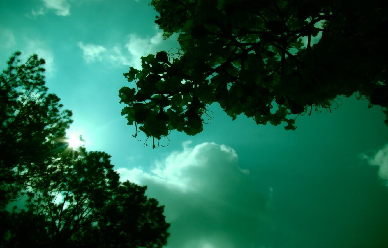 Фото обои зелень, небо, солнце, настроение
