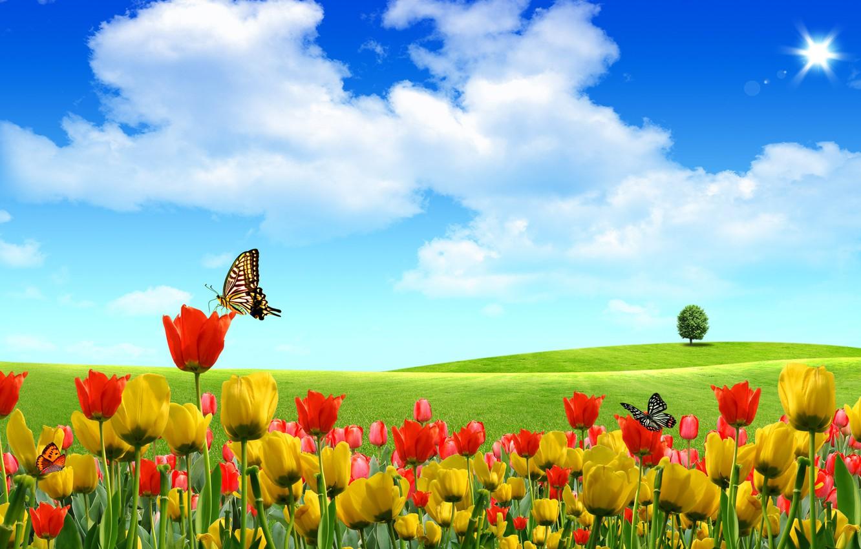 Фото обои лето, небо, бабочки, цветы, природа, тюльпаны