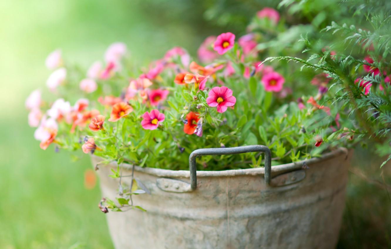 Фото обои зелень, цветы, нежность, ведёрко