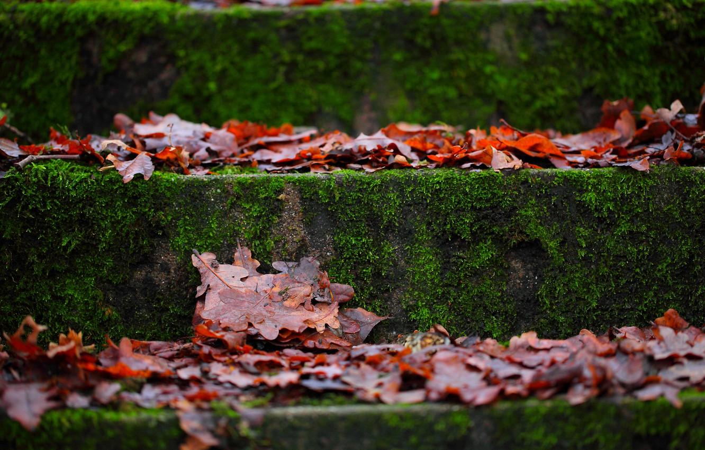 Фото обои осень, макро, листва, мох, ступени
