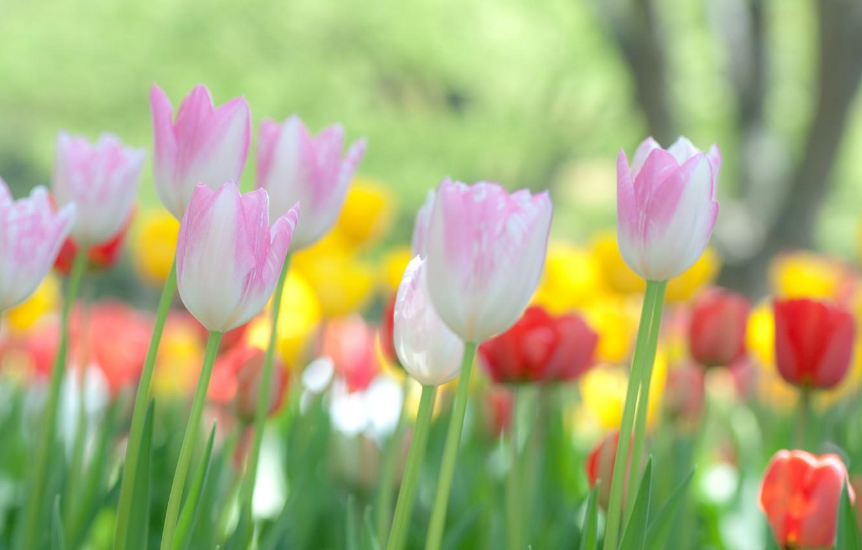 Обои цветы, широкоформатные. Природа foto 8