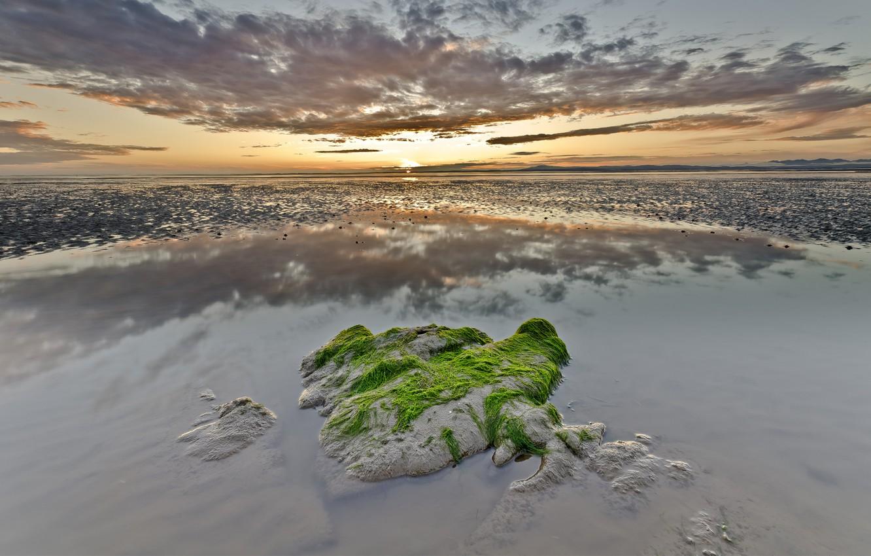 Фото обои море, облака, водоросли, закат, отражение, камень, мель, поросль