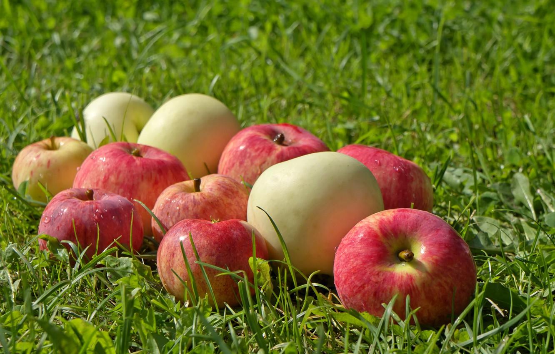 Фото обои зелень, трава, поляна, яблоки, фрукты, мокрые