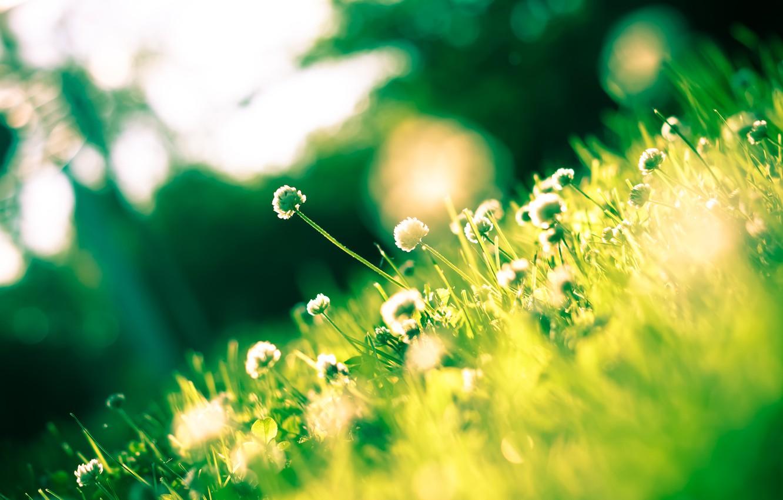 Фото обои зелень, трава, растения, клевер