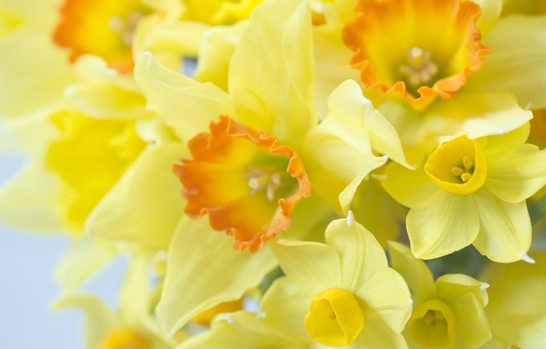 Красивые картинки с свежими цветами показал
