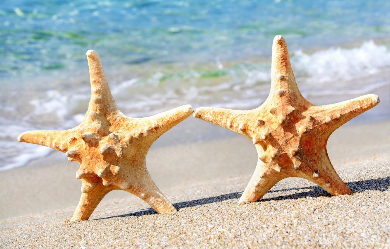 Фото обои песок, море, пляж, морская звезда, summer, beach, sea, sand, starfish