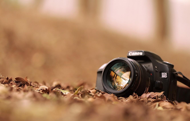Фото обои листья, фотоаппарат, canon