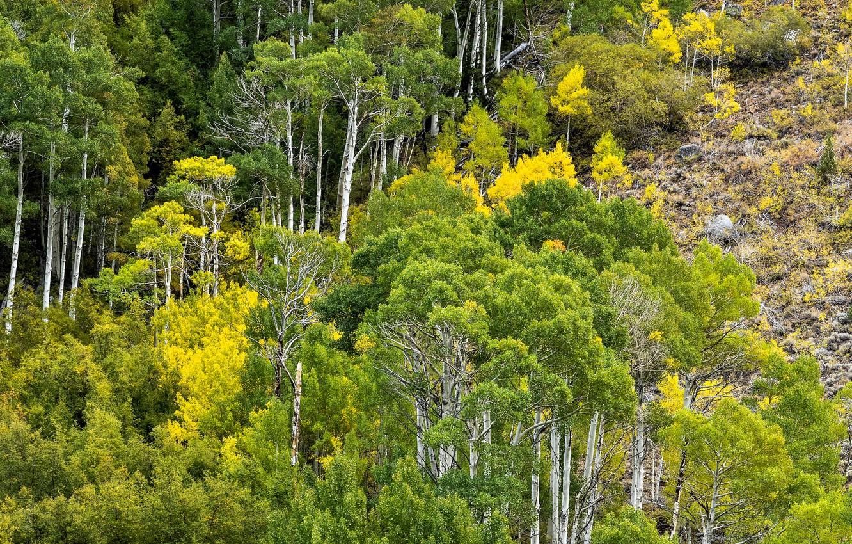 Фото обои осень, лес, деревья, горы, склон