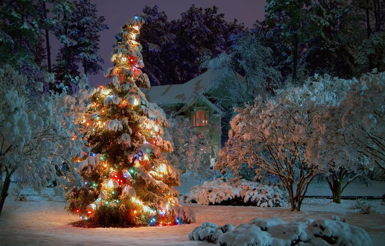 Фото обои зима, снег, деревья, ночь, дом, праздник, ель, ёлка, гирлянды