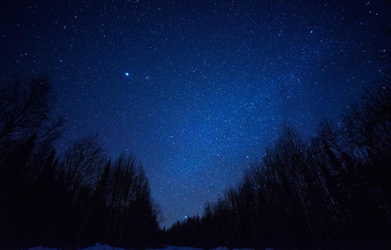 Фото обои космос, звезды, деревья, ночь, пространство, силуэт, млечный путь