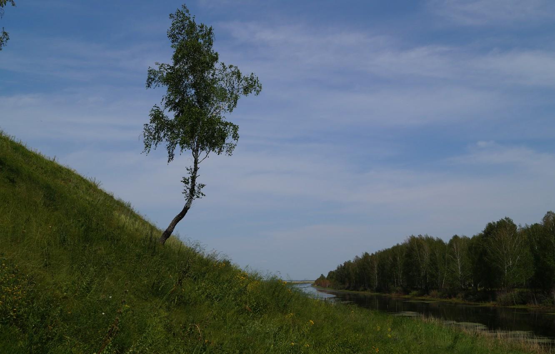 Фото обои лес, речка, одинокая береза