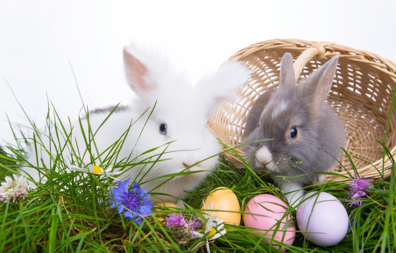 Обои Easter, пасхальные яйца, Happy easter, яйца. Праздники foto 15