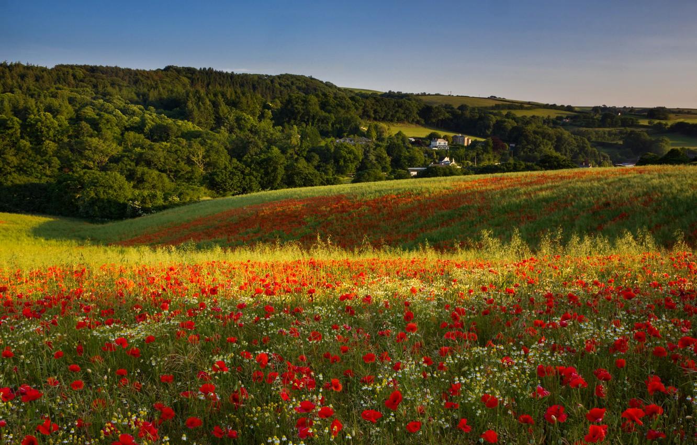 вам фотографии цветущего луга рассказ томате