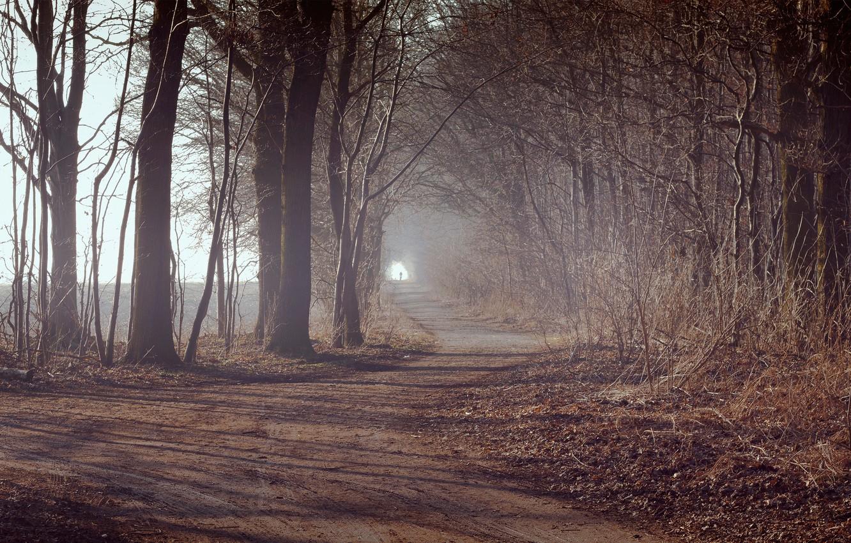 Фото обои дорога, осень, лес, листья, деревья, растения