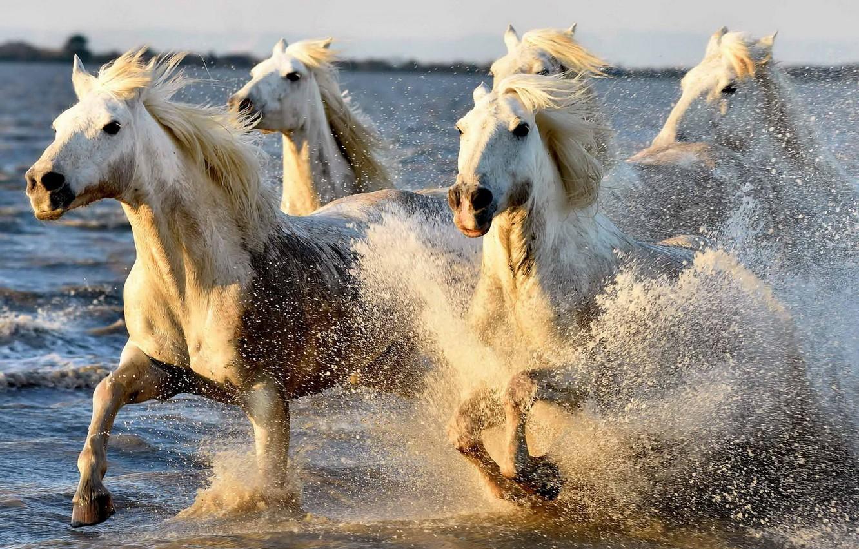 а кони все бегут картинки таких