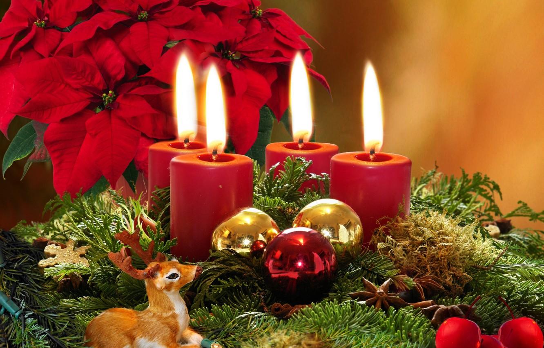 Фото обои цветы, ветки, шары, елки, свечи, ёлочные, рождественские, пуансеттия, пуансетия, Оленёнок