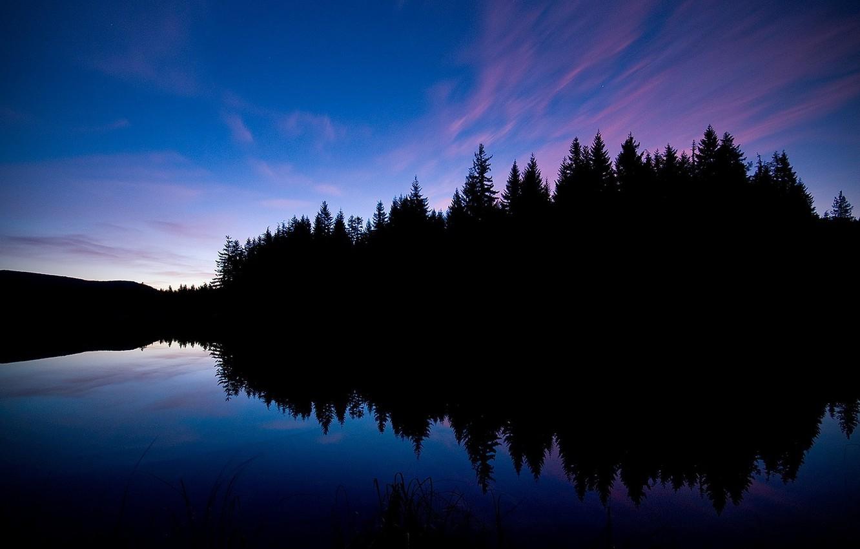 картинки лесное озеро ночью пересадки здорового