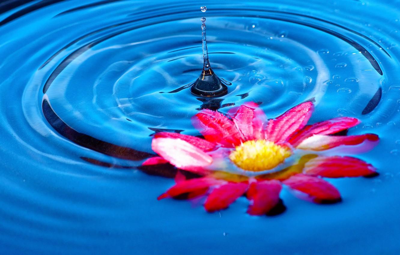 Фото обои цветок, вода, всплеск, лепестки