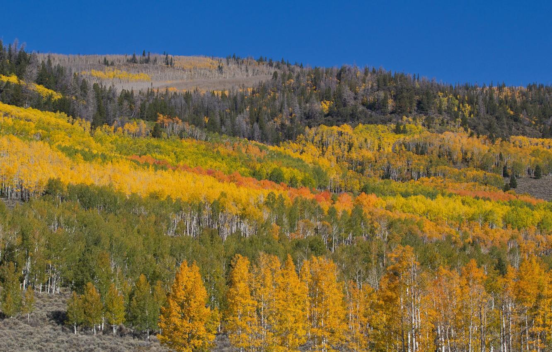 Фото обои осень, лес, небо, деревья, пейзаж, горы, склон