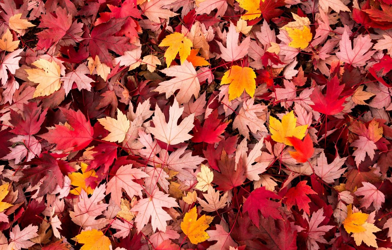 Фото обои осень, листья, макро, фон, widescreen, обои, wallpaper, листочки, листопад, широкоформатные, background, autumn, leaves, macro, полноэкранные, …