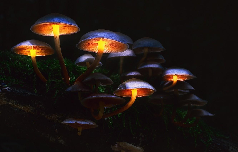 Фото обои осень, лес, макро, свет, мрак, грибы