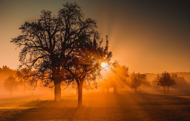 Фото обои поле, природа, туман, дерево, утро