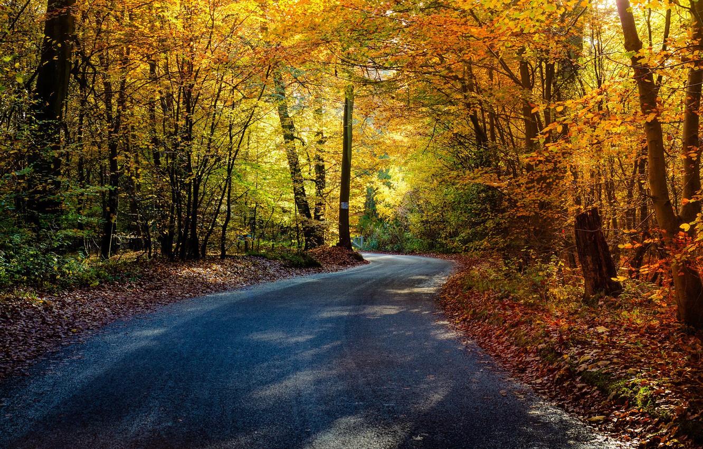 Фото обои road, trees, autumn, leaves, autumn colors, shadows, sunlight, countryside, gate, woodland