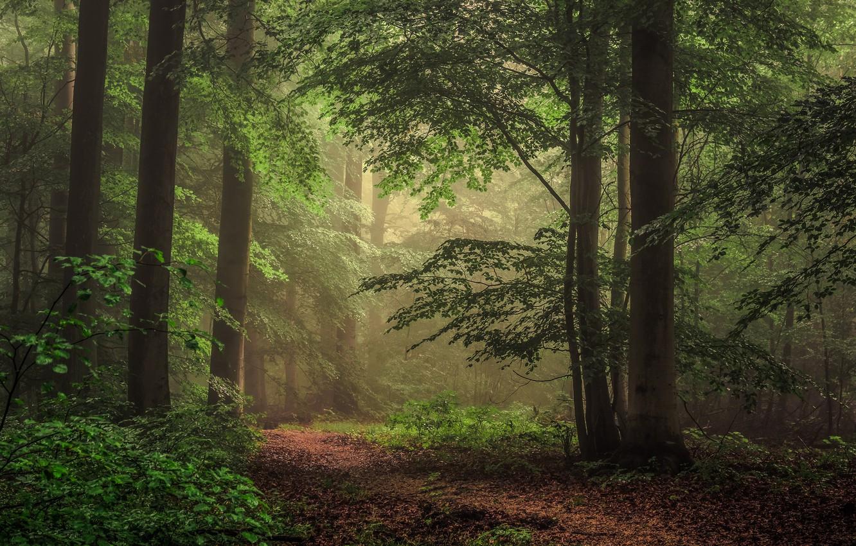 Фото обои осень, лес, деревья, природа