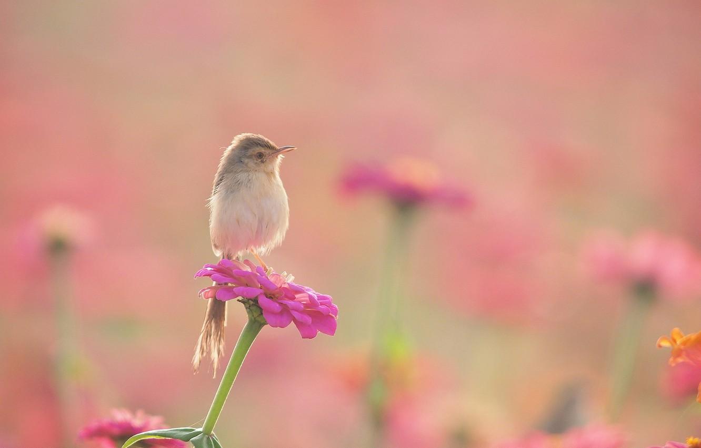 Фото обои цветы, птица, клумба, камышевка