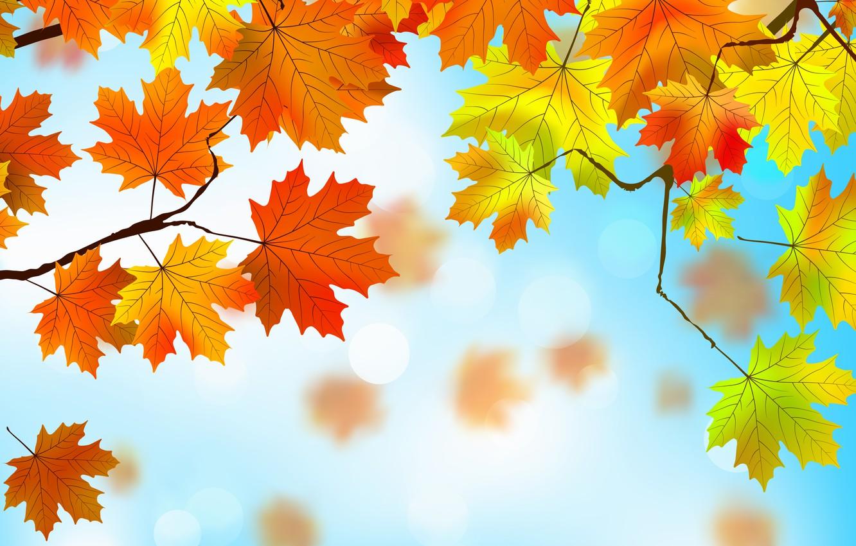 Фото обои листья, фон, autumn, leaves, осенние, maple