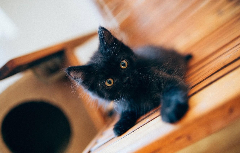 Фото обои чёрный, малыш, котёнок, чёрный котёнок