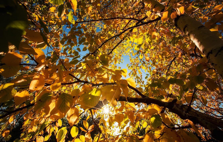 Фото обои осень, небо, листья, деревья, краски, береза
