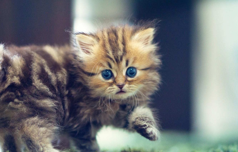 Обои котёнок, daisy, Кошка, ben torode. Кошки foto 6