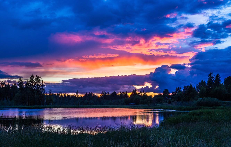 Фото обои лес, небо, трава, вода, облака, деревья, пейзаж, природа, озеро