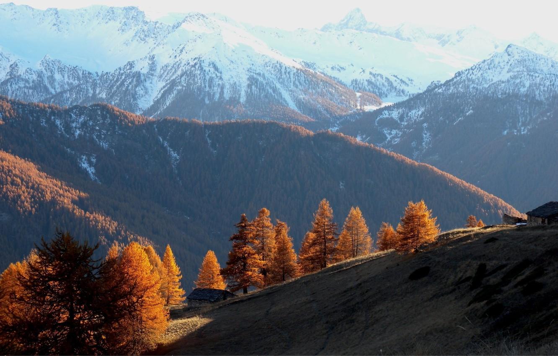 Фото обои лес, деревья, горы, Осень, холм