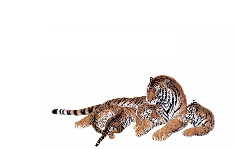 Фото обои любовь, малыши, мама, забота. ласка, тигрица, тигрята