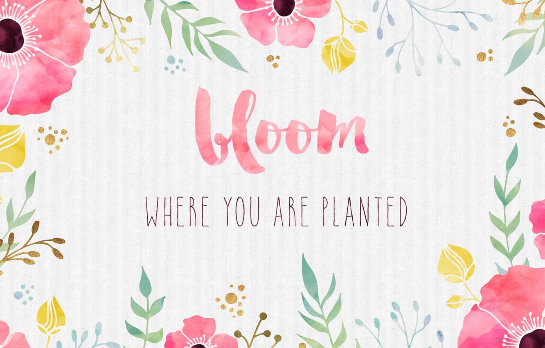 Фото обои цветы, фон, краски, маки, акварель, фраза, цитата, вдохновение, мотивация, цвети, bloom
