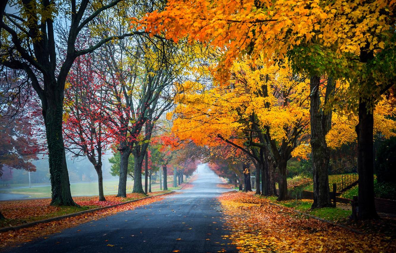 Обои forest, autumn, leaves, tree. Природа foto 14