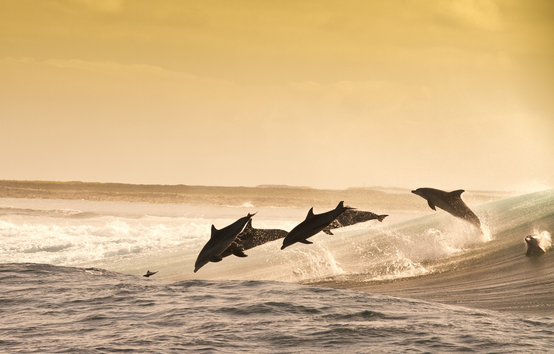 Фото обои sea, evening, jumping, wave, dolphins, playful, water splash